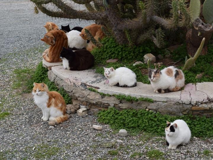 ¿Cuántos gatos es demasiado?