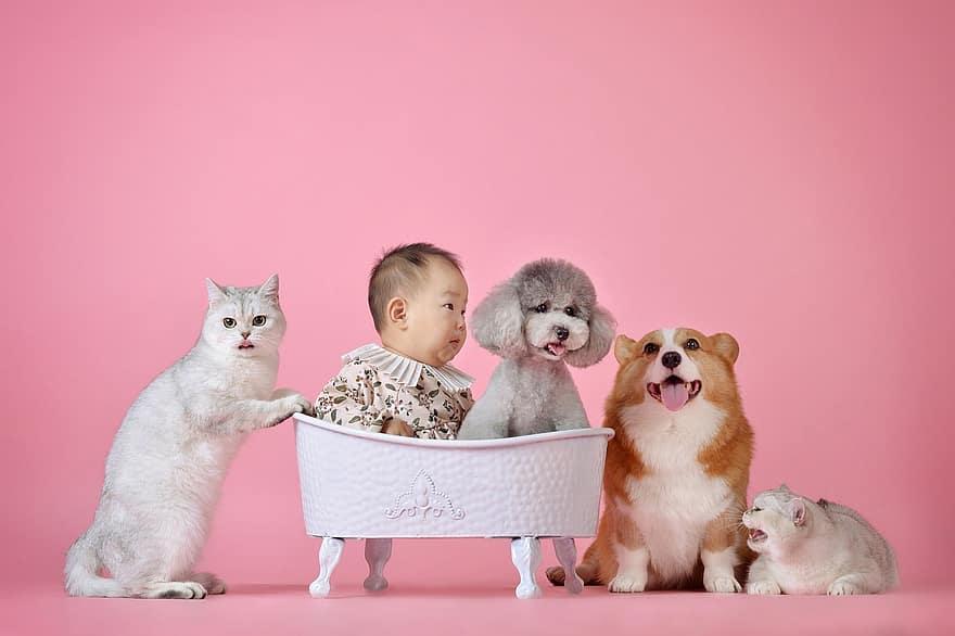 ¿Qué diferencia a los gatos de otros animales?