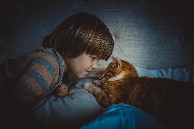 ¡No hay gatos malos! Problemas de conducta y cómo resolverlos