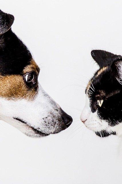 14 razones por las que los perros y gatos pueden llevarse bien