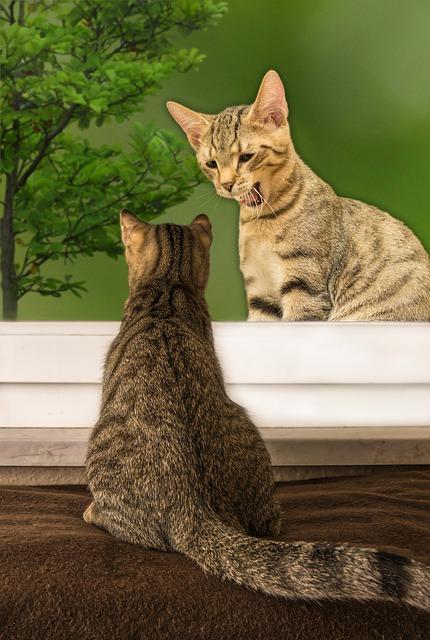 ¿Cuáles son las diferencias entre gatos domésticos y salvajes?