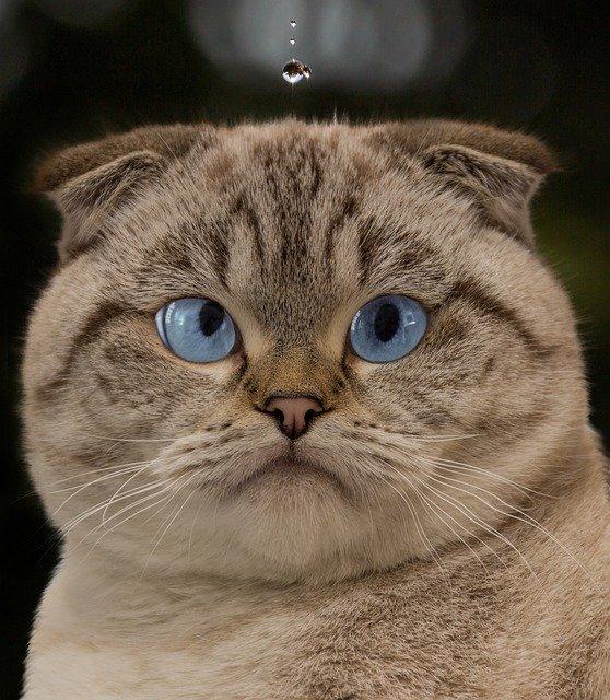 4 cosas que los gatos realmente odian