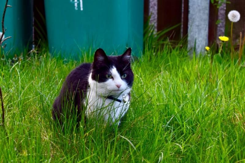 gatos comen hierba