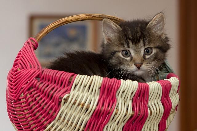 Cómo preparar a tu gato para viajar en un transportín