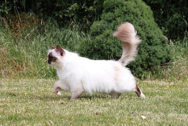 ¡Aprenda los secretos que revela la cola de su gato!