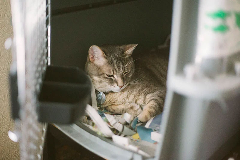 ¿Está bien dejar a un gato en una jaula todo el día o de noche?