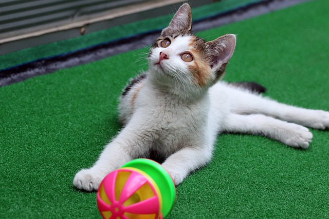 Diferentes juguetes para diferentes gatitos