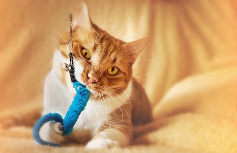 Problemas de comportamiento de los gatitos: cómo domesticar a tu gatito juguetón