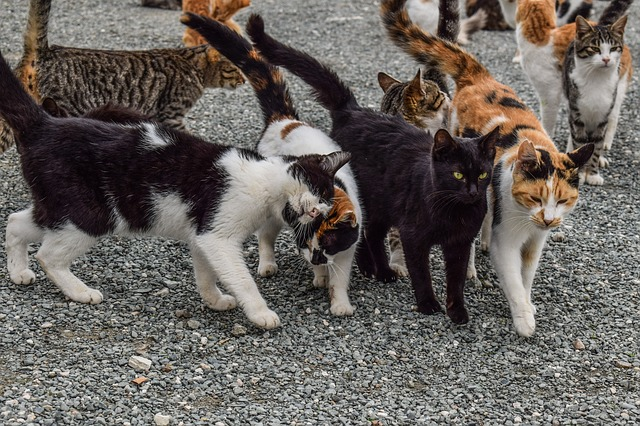 Hasta 60 millones de gatos sin hogar