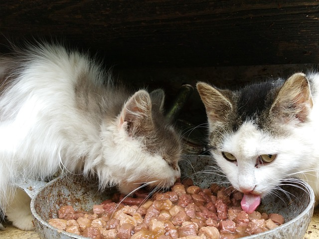 Información nutricional importante sobre la comida para gatos