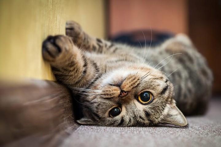 ¿Pueden los gatos ser autistas?