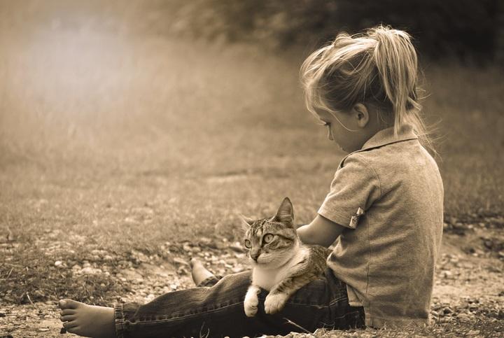 Las 3 razas de gatos más cariñosas