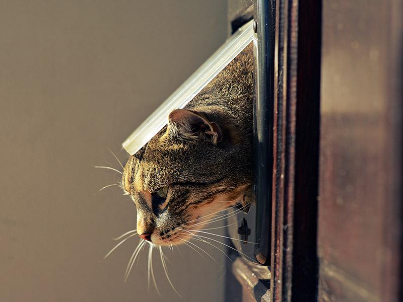 Cómo entrenar a los gatos para que usen una puerta para gatos o tocar una campana para que los dejen entrar