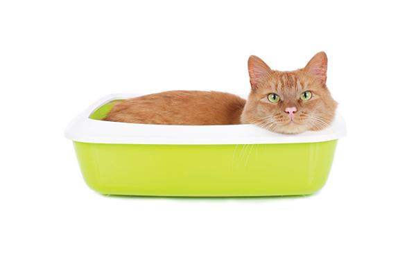 Caca de gato: cuándo preocuparse