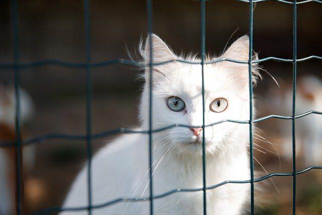 6 razones por las que es mejor adoptar que comprar un gato