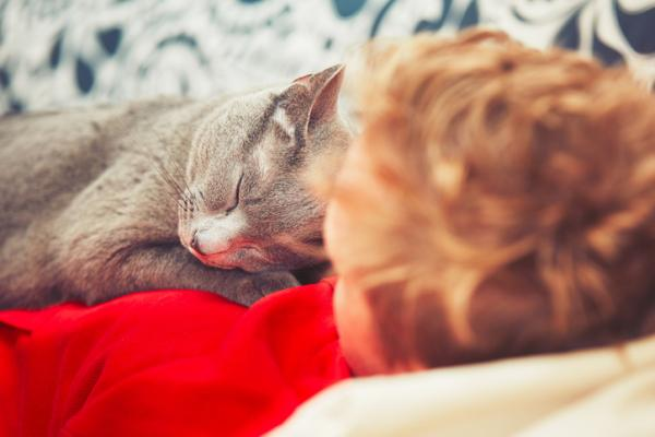 ¿Son los animales sanadores?  El poder curativo del ronroneo de un gato