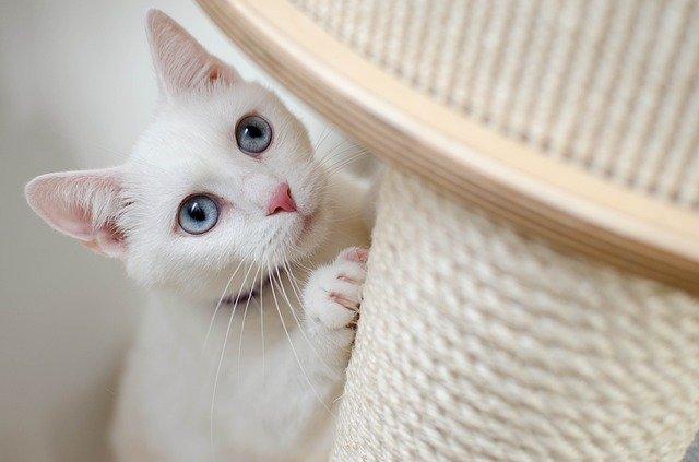Cómo entrenar a tu gato para que use un poste rascador