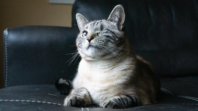 Cuidando gatos con necesidades especiales