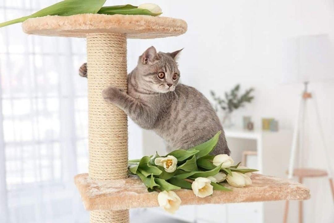La guía definitiva de árboles ecológicos para gatos