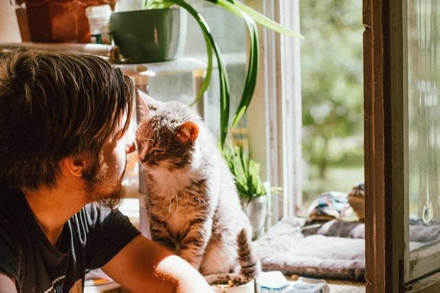 7 increíbles beneficios para la salud mental de tener gatos