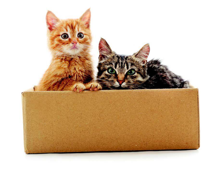Todo lo que necesitas saber sobre los Gatos con síndrome del compañero de camada