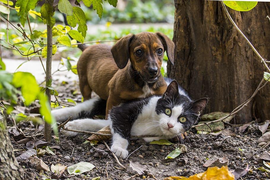 Cómo evitar que tu perro salchicha persiga gatos