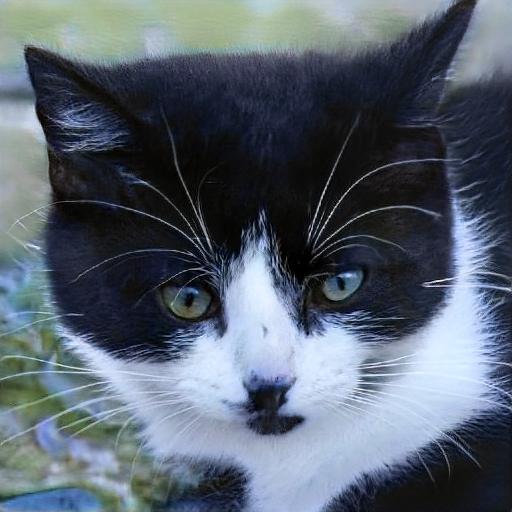 Síntomas de intoxicación por gatos que todo propietario debe conocer