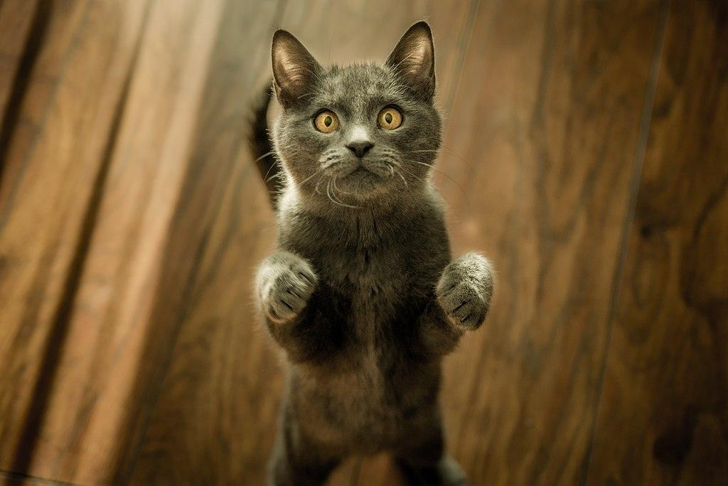 ¿Cómo se comunican los gatos?