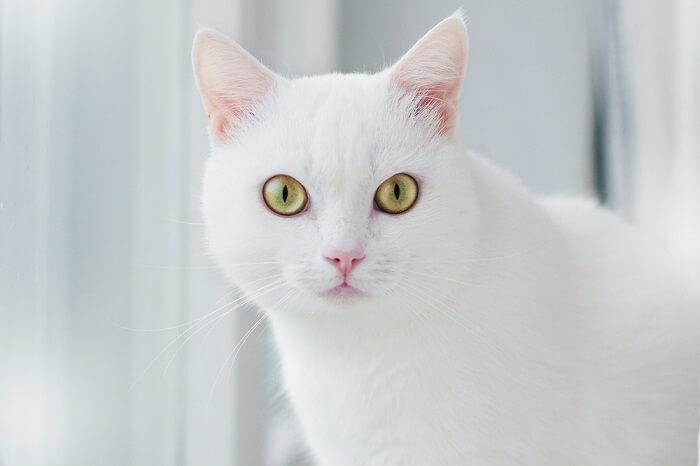 5 razones de por qué te mira fijamente un gato