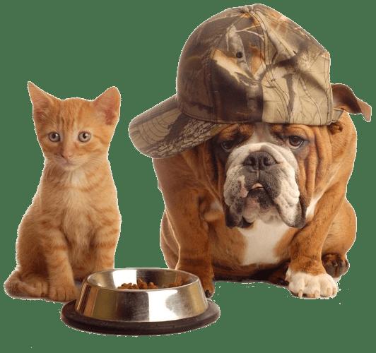 ¿Pueden los gatos comer comida para perros?