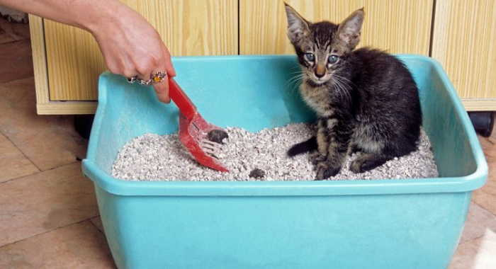 Tabla de heces de gato: decodificando las heces de tu gato