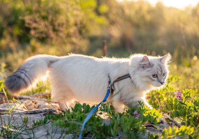 Guía completa para ir de excursión con tu gato