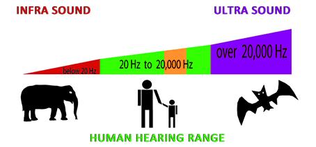 audição humana
