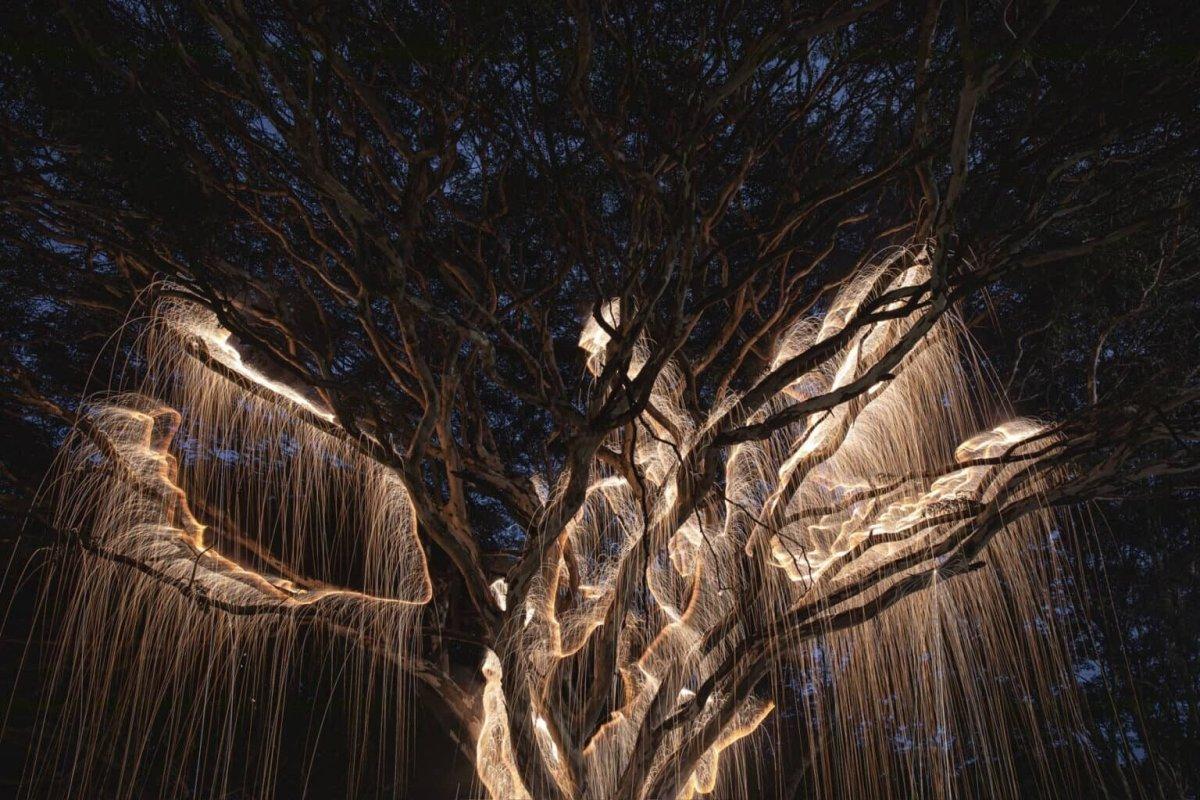Los árboles de luz del fotógrafo brasileño Vitor Schietti