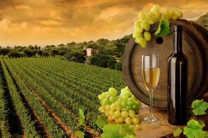 wine-tuscany1