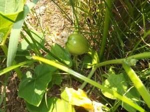 I Heart Baby Veg: An Ode to Gardening