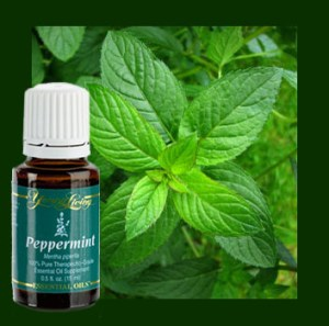 Uses for Pepermint oil