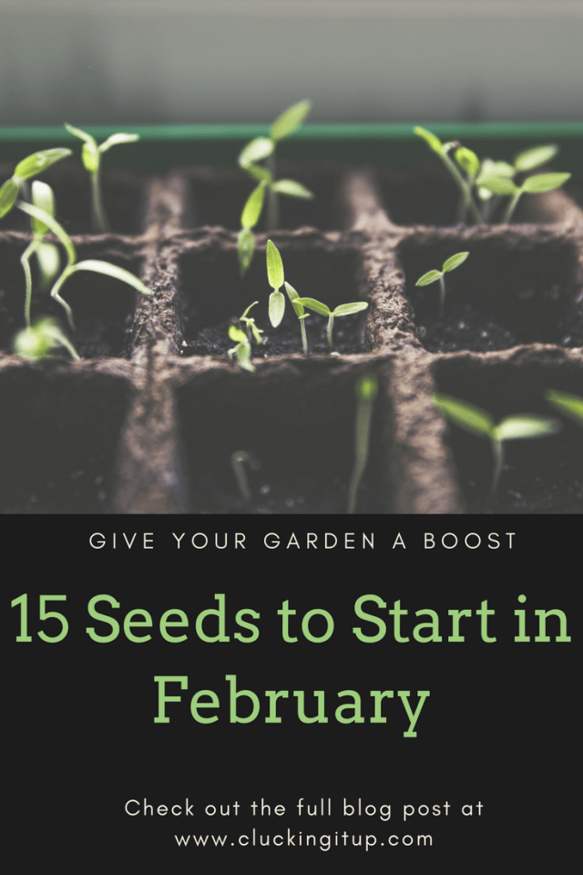 15 Seeds to Start in February