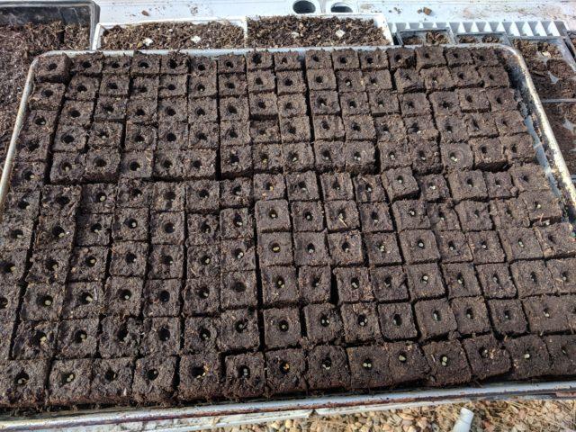 Soil Block VS Potting Tray