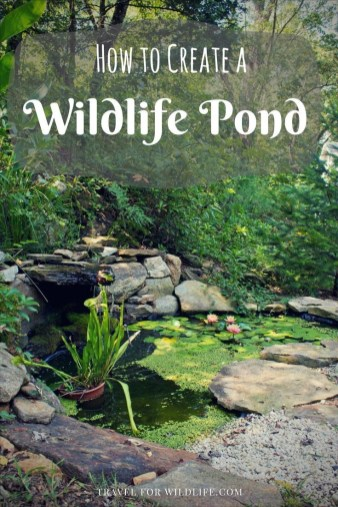 Casual Backyard Ponds Design Ideas For Garden To Try Asap46