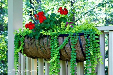 Pretty Planter Design Ideas For Summer Porch To Looks Amazing37