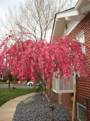 Comfy Flowering Tree Design Ideas For Your Home Yard07