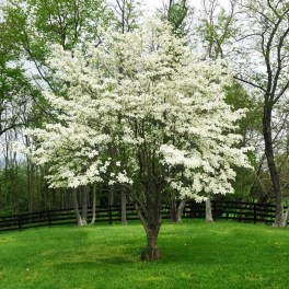 Comfy Flowering Tree Design Ideas For Your Home Yard25