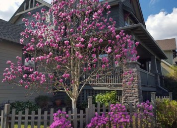 Comfy Flowering Tree Design Ideas For Your Home Yard32