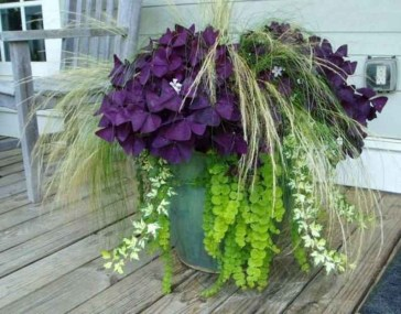 Sophisticated Container Garden Flower Ideas For This Winter To Try19