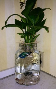 Awesome Indoor Water Garden Design Ideas That Refresh Your Interiors20