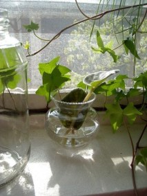Awesome Indoor Water Garden Design Ideas That Refresh Your Interiors28