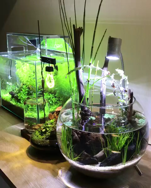 Awesome Indoor Water Garden Design Ideas That Refresh Your Interiors33