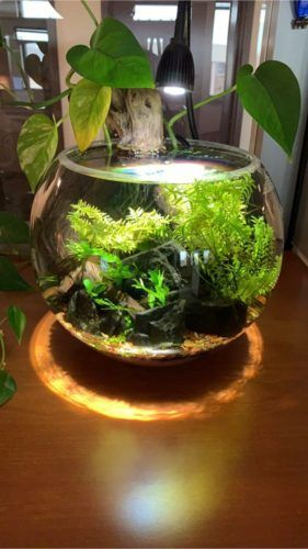 Awesome Indoor Water Garden Design Ideas That Refresh Your Interiors37