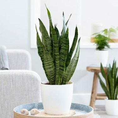 Fascinating Indoor Plants Design Ideas With Desert Atmosphere To Have03